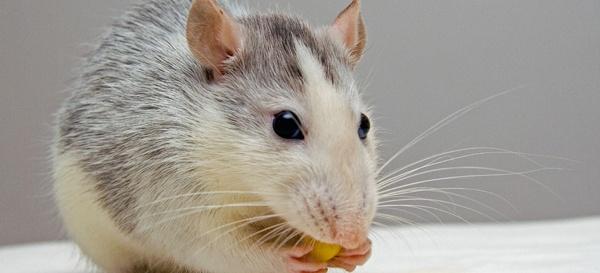 drug-development-animal-testing