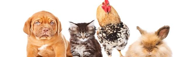 blood-sampling-companion-livestock-animals.jpg