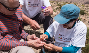 collecting a blood sample from a mountain top