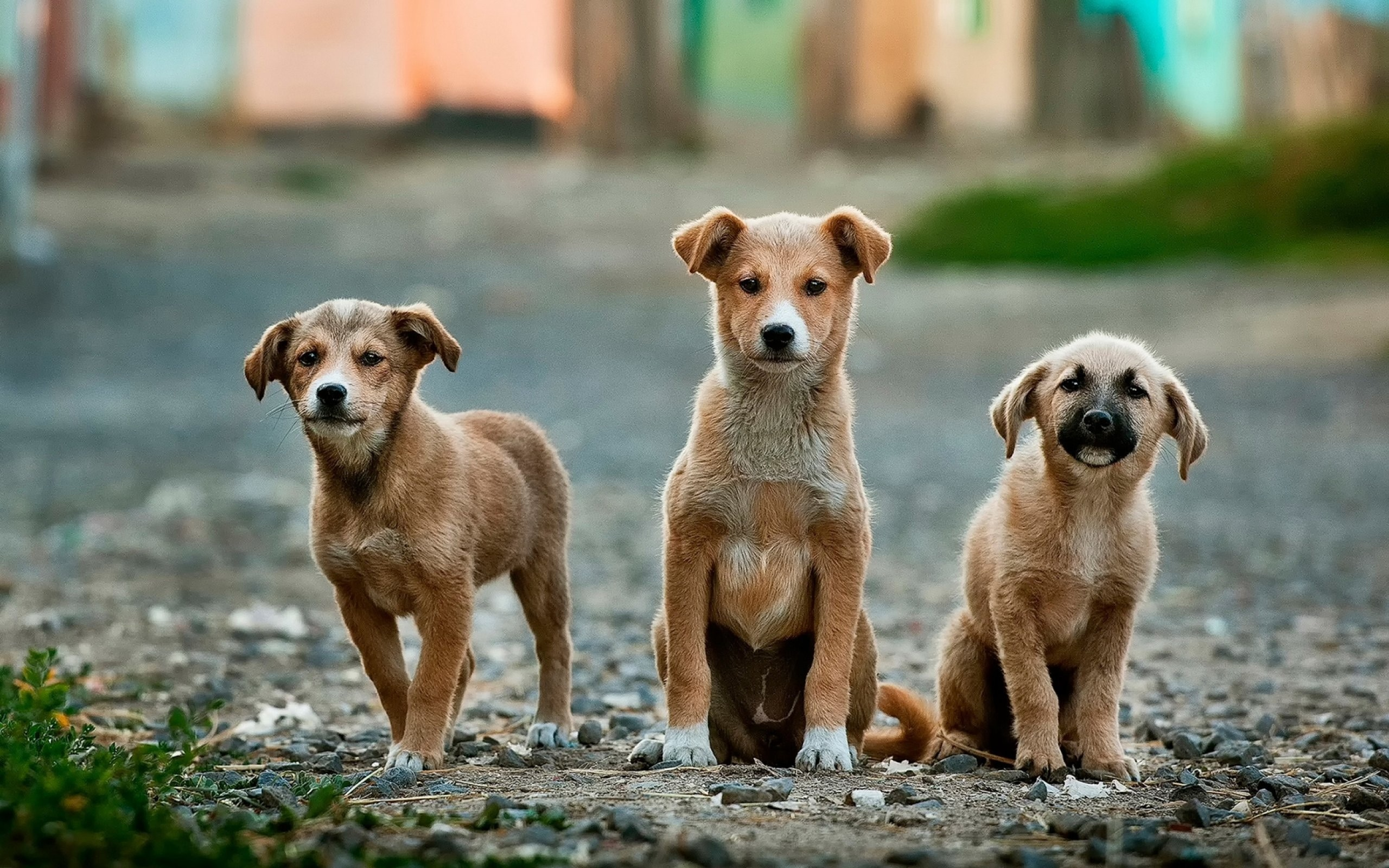 dna testing for pets: genomics goes to the dogs