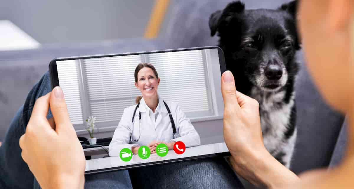 telemedicine for pets: remote blood collection enables tele-vet care