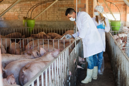 livestock: how to comply with regulations